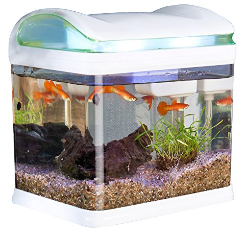 Sweetypet Aquarium: Transport-Fischbecken mit Filter, LED-Beleuchtung und USB, 3,3 Liter (Miniaquarium)