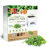 Seed Box cultivame - padrón Peppers