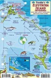 Eleuthera Island Bahamas Dive Map & Reef Creatures Guide Franko Maps Laminated Fish Card by Franko Maps Ltd. (2011-01-01)