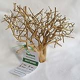 Tantora Driftwood mini - Legno Radice per Piccoli Acquari