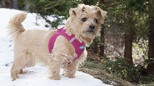 CURLI Brustgeschirr Plush Vest AIR-MESH camouflage für Hunde XL (53 – 58cm) - 5
