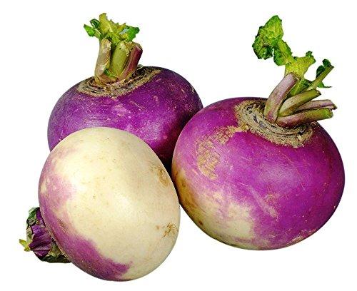 Violet Top Blanc Globe Navet Heirloom Jardin non-OGM légumes-racines (~ 200 graines)
