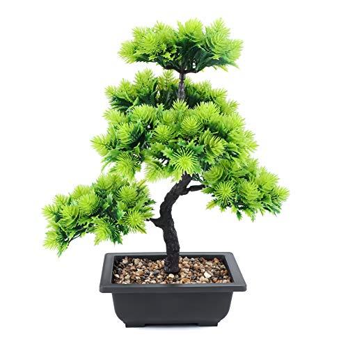 Kleine Kleine Bäume
