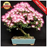 Portal Cool 10Pcs Bonsai Albizia Blumensamen Mimosa Seidenbaum Ziertopfpflanzen Startseite