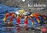 Krabben. Witzige Monster (Wandkalender 2019 DIN A4 quer): Kleine Aliens zum genaueren Betrachten (Geburtstagskalender, 14 Seiten ) (CALVENDO Tiere)