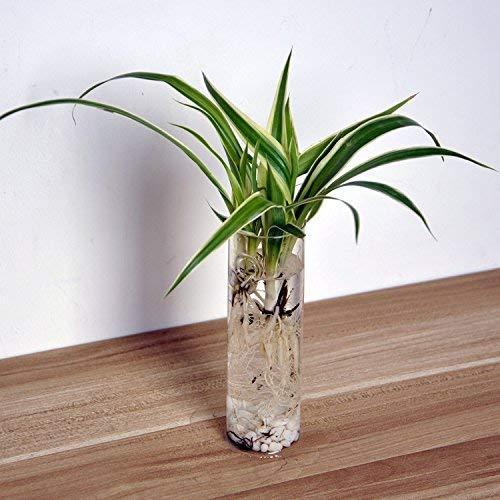 Home Klarer Zylinder Glas Blumentopf Mini Wandbehang Wasserpflanze Vase Tank (Color : -, Size : -)