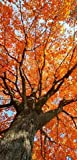 Textilbanner - Thema: Herbst - Herbstbaum - 180cmx90cm - Banner zum Hängen & Dekorieren