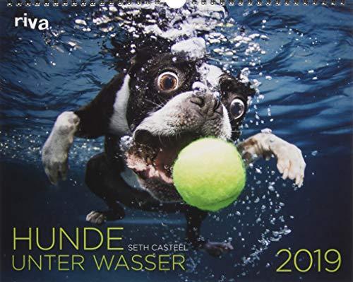 Hunde unter Wasser 2019: Wandkalender (Hund Kalender)