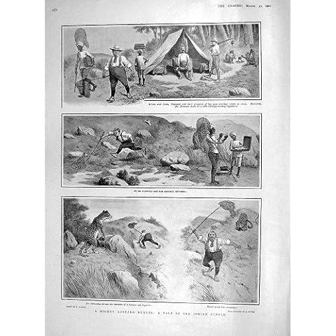Leopardo 1907 Que Caza Deporte De Los Animales Salvajes De La Selva De La India