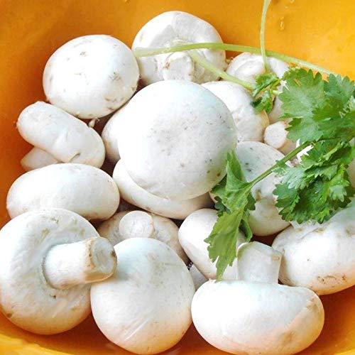 Descripción: Egrow 100Pcs/bolsa semillas de setas blancas nuevas semillas de verduras comestibles y saludables Bonsai semillas de plantas La seta tiene una superficie cortical. En el micelio cortical contiene diferentes pigmentos, por lo que el pelaj...