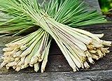 Semillas de hierba de limón - Cymbopogon citratus