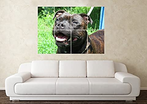 Large Staffordshire Bull Terrier Staffy Dog Crufts Pedigree Wall Poster Art Picture Print