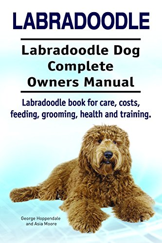 Labradoodle Labradoodle Dog Labradoodle Dog Book For Costs Care