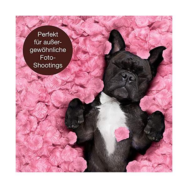 WeddingTree 2000 Pétalos de Rosa Sueltos Rosa – Ideales para Bodas, día de San Valentín, cumpleaños, Fiestas y…