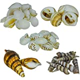 Zevora Sea Shells For Home Decor, Aquarium, Pack Of 5 (Shells Combo Of 5 Small Mix Shells)