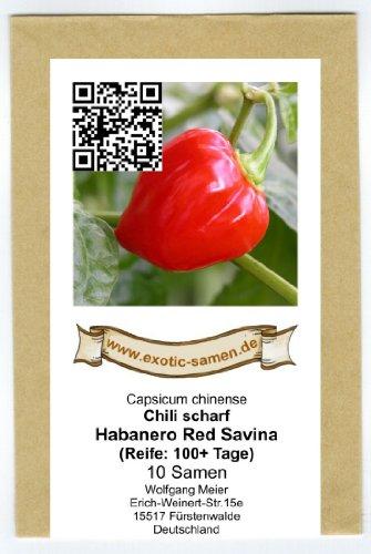 Galt über viele Jahre als schärfstes Chili der Welt - Habanero Red Savina - 10 Samen