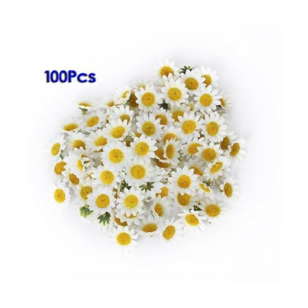 AKORD – 100Margaritas Artificiales para Manualidades, Bodas y Fiestas, plástico, Blanco, 3.9 x 3.9 x 2 cm