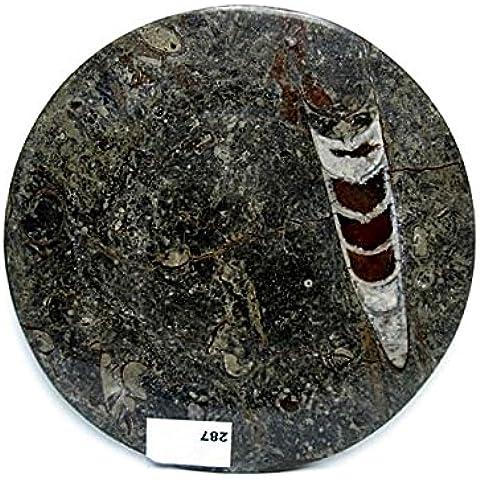Natural mente–Fossil ien–Piatto, 21CM, Orthoceras, Ammonit, cristallo, versteinerung, minerale, N. 287