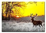 Berger Designs Bild auf Leinwand als Kunstdruck in Verschiedenen Größen. Prächtiger Hirsch im Sonnenuntergang. Beste Qualität aus Deutschland (120 x 80 cm (BxH))