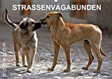 STRASSENVAGABUNDEN (Wandkalender 2020 DIN A2 quer): Straßenhunde in Ecuador (Monatskalender, 14 Seiten ) (CALVENDO Orte) -