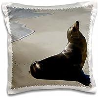 Galapagos Islands - Galapagos sea lion, Gardner Bay, Galapagos Islands - Pete Oxford - 16x16 inch Pillow Case