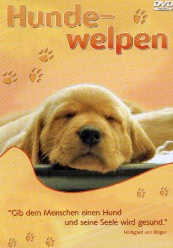 Preisvergleich Produktbild Hundewelpen