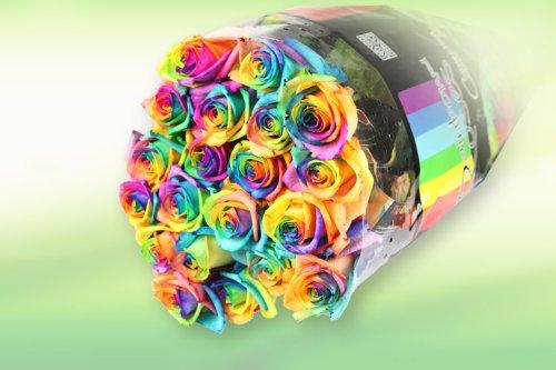 10 Regenbogen-Rosen im Bund: groß, unbearbeitet – Rosenbote Blumenversand