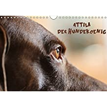 Attila, Der Hundekönig (Wandkalender 2017 DIN A4 quer): Die vielen Gesichter des Attila H. (Monatskalender, 14 Seiten ) (CALVENDO Tiere)