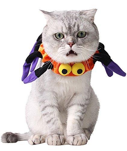 hen Hund Katze orange lila Spinne Halloween Kragen Kostüm Kleid Outfit (Junge Spinne Kostüme)