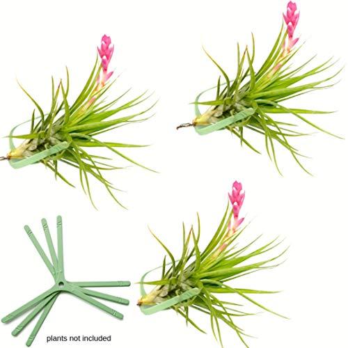 zen-Sets zum Aufhängen, für Pflanzen, vertikaler Garten, lebende Pflanzen, Terrarien, Wand-Pflanzgefäß, Wandmontage, für den Innenbereich, inklusive Luftpflanzen ArtAK V Small grün ()