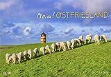 Moin! Ostfriesland - Kalender 2019 -