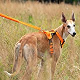 DINGG No Pull Dog Vest Harness Reflective Stitching Sesure Night Visibility, Outdoor Adventure Big Dog Harness Harness Perfect Match Puppy Vest 4Size,Orange,XL
