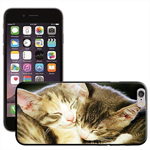 Fancy A Snuggle 'Süßer schwarz Katze bereit für Weihnachten Wearing Santa Hat' Hard Case Clip On Back Cover für Apple iPhone 5C Cute Kittens Asleep Together