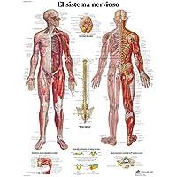 3B Scientific Impreso En Papel, el Sistema Nervioso