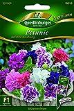Petunien gefüllte Mischung QLB Premium Saatgut Blumen einjährig
