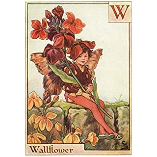 W = Wallflower Fairy by Cicely Mary Barker. Alphabet Flower Fairies, c1934
