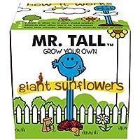 Mr Men  - Kit de cultivo en casa, color multicolor