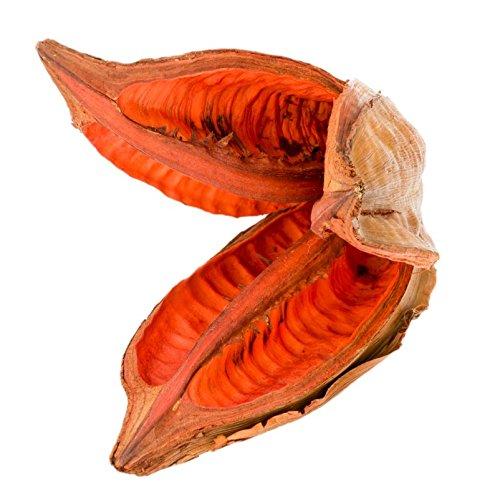 NaDeco Sororoca Frucht orange ca.10-15cm | Strelitzia nicolai | Madeira Head | Baum Strelitzie | exotische Trockenblume | Naturdeko | Trockendeko