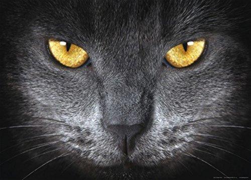 Gatos - Bright Eyes Póster Fotomural (160 x 115cm)