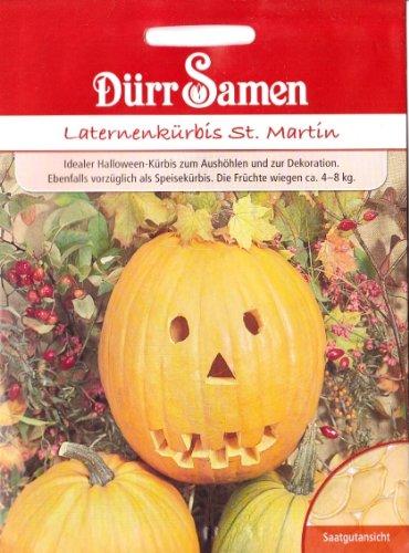 lloween Kürbis, Cucurbita maxima, ca. 6 Samen (Halloween Laterne Kürbis)