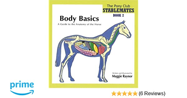 Body Basics - a Guide to the Anatomy of the Horse (Pony Club ...