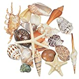 Jangostor 21 PCS conchiglie di mare medie miste conchiglie di mare oceano, varie dimensioni conchiglie colorate naturali stelle marine perfette per la spiaggia festa a tema decorazioni per la casa