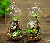 2pcs/lot wedding bonsai vasos decorativo...