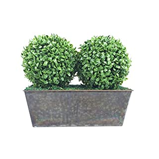 GreenBrokers Artificial Double Ball Aglaia Boxwood in Slanted Rustic Tin