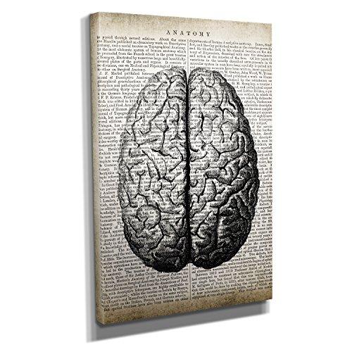 Vintage Brain Anatomy - Kunstdruck auf Leinwand (20x30 cm) zum Verschönern Ihrer Wohnung. Verschiedene Formate auf Echtholzrahmen. Höchste - Für Der Arbeit Deko-ideen Bei Halloween