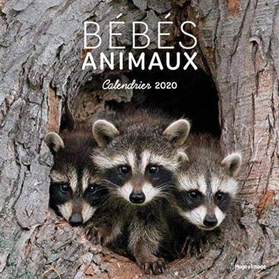 Calendrier mural Bébés animaux 2020