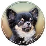 Autoaufkleber Chihuahua