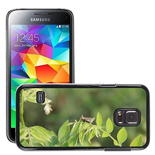 Grand Phone Cases Bild Hart Handy Schwarz Schutz Case Cover Schale Etui // M00141642 Insect Werkstoff Fly // Samsung Galaxy S5 MINI SM-G800 (Fly Cover Samsung S5 Mini)