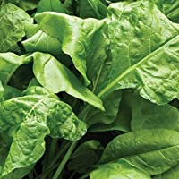 If your summer spinach is always running to seed before you manage to get a worthwhile crop off it, then Spinach Perpetual is the variety for you because it virtually never runs to seed in its first season, therefore very good on dry ground. Spina...