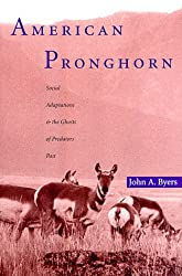 American Pronghorn: Social Adaptations and the Ghosts of Predators Past